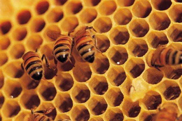 От днес животновъди и пчелари кандидатстват по de minimis