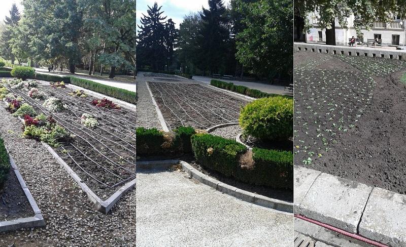 Започна есенно-пролетното зацветяване в Добрич