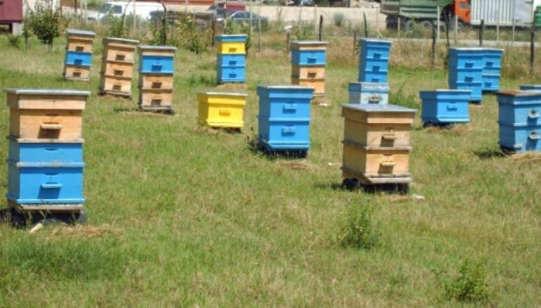 Какви мерки за пчеларите ще действат през новата ОСП