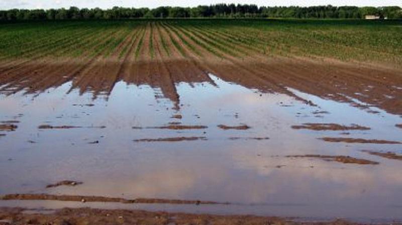 Фермерите с наводнени ниви могат да получат компенсация