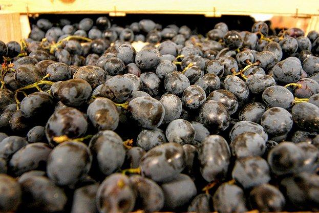 """От 1 март стартира прием по мярка """"Кризисно съхранение на вино"""""""