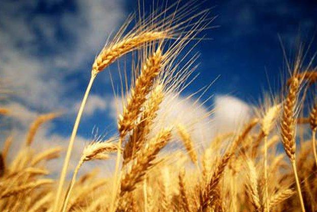 ДФЗ отпуска 5 млн. лв. за съфинансиране на застраховки на селскостопанска продукция
