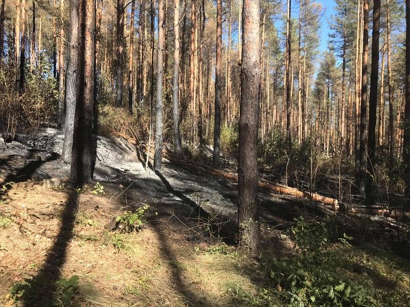 Ловните и горски стопанства в област Добрич са готови за новия пожароопасен сезон