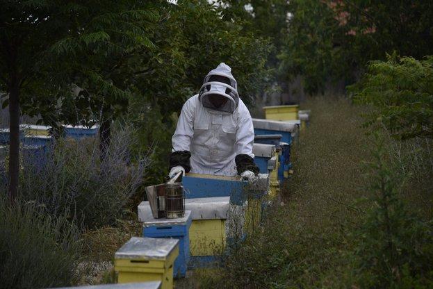 Учени и експерти ще предложат конкретни действия и мерки за ограничаване на повишената смъртност при пчелните семейства