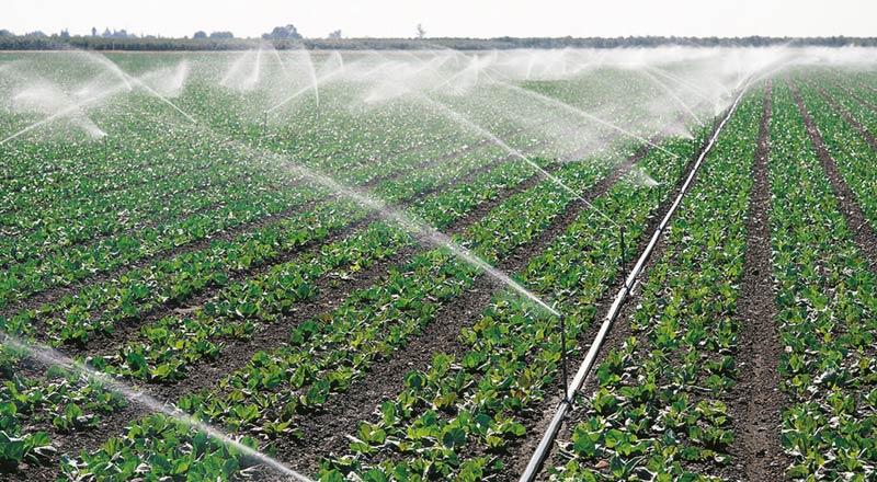 С бюджет от над 422 млн. лв. стартира приемът на проекти за инвестиции в земеделските стопанства