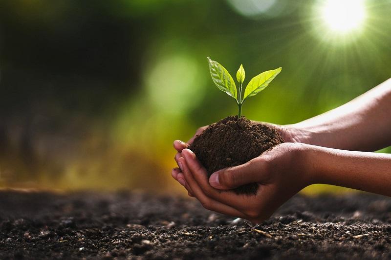 90 декара нови гори ще бъдат залесени в ДГС – Добрич тази година