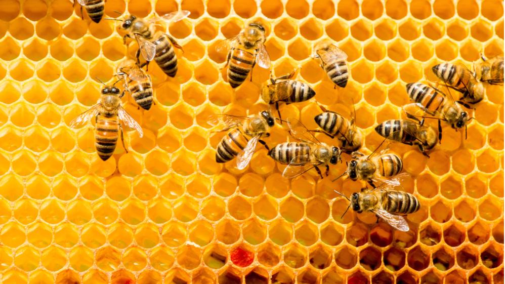 Изтича крайният срок за подаване на заявления за плащане на пчеларите, изпълнили договорите си по Националната програма