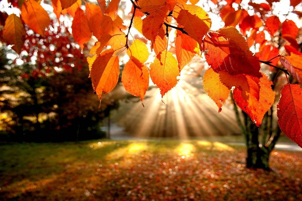 Настъпва астрономическата есен